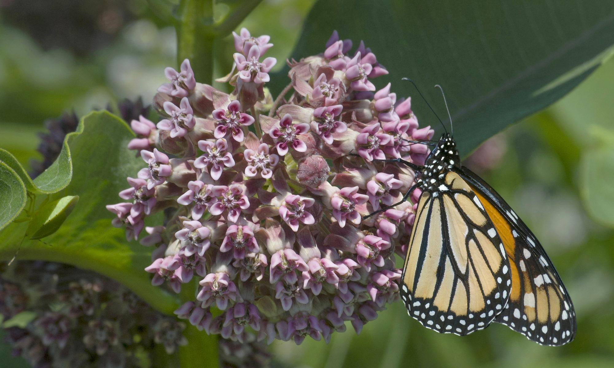 Chattanooga Area Pollinator Partnership
